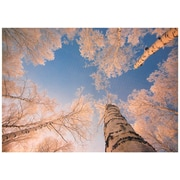Oriental Furniture Treetops in Daylight Photographic Print on Wrapped Canvas