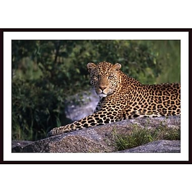 Printfinders 'Leopard Laying On Kopje, Serengeti National Park' Framed Photographic Print