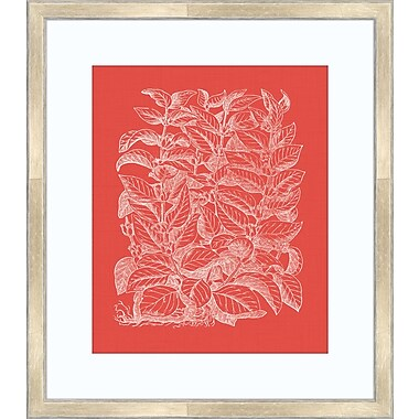 Melissa Van Hise Floral Impression II Framed Graphic Art; Watermelon