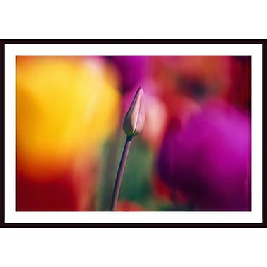 Printfinders 'Selective Focus Tulip Flower Field' by Craig Tuttle Framed Photographic Print