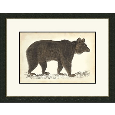 Melissa Van Hise Bear ll Framed Graphic Art
