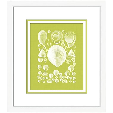 Melissa Van Hise Coquillage IV Framed Graphic Art; Green