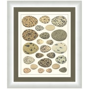 Melissa Van Hise Eggs I Framed Graphic Art