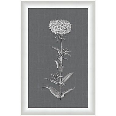Melissa Van Hise Flora I Framed Graphic Art