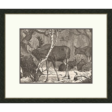 Melissa Van Hise Moose In The forest Framed Graphic Art