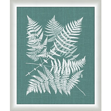 Melissa Van Hise Buckler Fern Framed Graphic Art