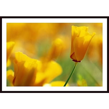 Printfinders 'Poppy' by Craig Tuttle Framed Photographic Print