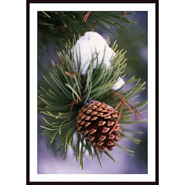 Printfinders 'Early Snow on Pine Tree Branch w/ Pinecone' by Craig Tuttle Framed Photographic Print