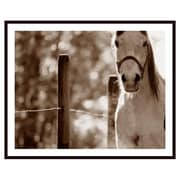 Printfinders 'Portrait of a Horse' by Con Tanasiuk Framed Photographic Print