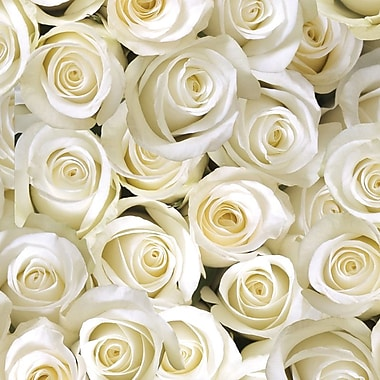 2 Sheet Flat Wedding/Anniversary Wrap, White Roses, 12/Pack