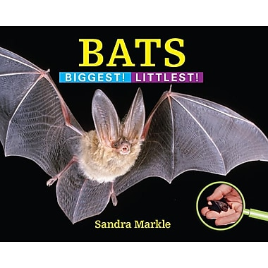 Bats: Biggest! Littlest!