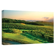 "ArtWall ""Hill-Top Vineyard"" Gallery Wrapped Canvas Art By Steve Ainsworth, 12"" x 24"""