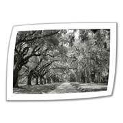 "ArtWall ""Live Oak Avenue"" Unwrapped Canvas Art By Steve Ainsworth, 32"" x 48"""