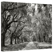 "ArtWall ""Live Oak Avenue"" Gallery Wrapped Canvas Art By Steve Ainsworth, 32"" x 48"""