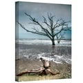 ArtWall in.Trees in Surfin. Gallery Wrapped Canvas Arts By Steve Ainsworth