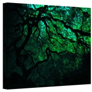 "ArtWall ""Japanese Dark Tree"" Gallery Wrapped Canvas Art By John Black, 18"" x 24"""