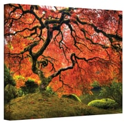 ArtWall Japanese Maple Tree Gallery Wrapped Canvas Art By John Black, 24 x 36