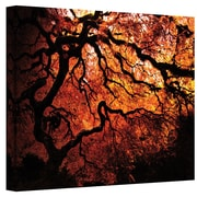 "ArtWall ""Fire Breather: Japanese Tree"" Gallery Wrapped Canvas Art By John Black, 24"" x 36"""