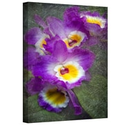 "ArtWall ""Irises"" Gallery Wrapped Canvas Art By David Liam Kyle, 24"" x 16"""