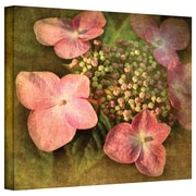 "ArtWall ""Pretty in Pink"" Gallery Wrapped Canvas Art By David Liam Kyle, 14"" x 14"""
