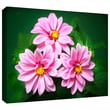 ArtWall in.Blooming Flowersin. Gallery Wrapped Canvas Art By David Liam Kyle, 16in. x 24in.