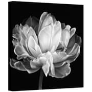 ArtWall Tulipa Double Black and White II Gallery Wrapped Canvas Art By Cora Niele, 14 x 14