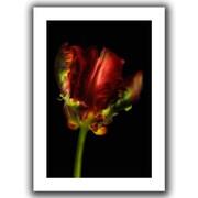 ArtWall Tulipa Parrot I Flat Unwrapped Canvas Art By Cora Niele, 24 x 36