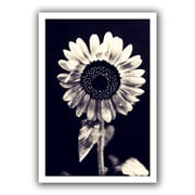 "ArtWall ""Black and White Sunflower"" Flat Unwrapped Canvas Art By Elena Ray, 12"" x 18"""