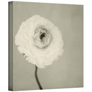 ArtWall Ranunculus Flower Gallery Wrapped Canvas Art By Elena Ray, 24 x 24