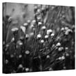 """ArtWall """"Anticipation"""" Wrapped Canvas Arts By Mark Ross"""