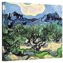 ArtWall Olive Trees Gallery Wrapped Canvas Art By