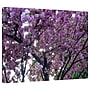 ArtWall Spring Flowers Gallery Wrapped Canvas Art By