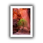 "ArtWall ""Utah-Green Tree Red Canyon"" Flat Unwrapped Canvas Art By Dan Wilson, 18"" x 12"""