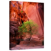 "ArtWall ""Utah-Green Tree Red Canyon"" Gallery Wrapped Canvas Art By Dan Wilson, 48"" x 32"""