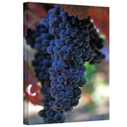 "ArtWall ""On The Vine"" Gallery Wrapped Canvas Arts By Kathy Yates"