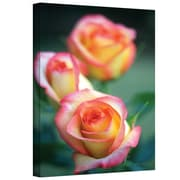 "ArtWall ""Rose Trio"" Gallery Wrapped Canvas Art By Kathy Yates, 12"" x 18"""