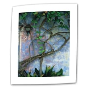 "ArtWall ""Vine and Wall"" Flat/Rolled Canvas Art By Kathy Yates, 16"" x 24"""
