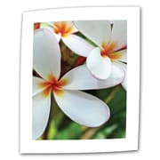 ArtWall White Plumeria Flat/Rolled Canvas Art By Kathy Yates, 12 x 18