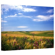 "ArtWall ""Field of Dreams"" Gallery Wrapped Canvas Arts By Kathy Yates"