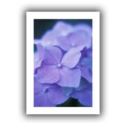 ArtWall Blue Hydrangeas Unwrapped Canvas Art By Kathy Yates, 32 x 48