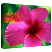 "ArtWall ""Maui Pink Hibiscus"" Gallery Wrapped Canvas Art By Kathy Yates, 24"" x 36"""