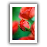 ArtWall Rosebud Unwrapped Canvas Art By Kathy Yates, 16 x 24