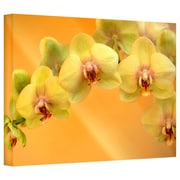 "ArtWall ""Yellow Phalaenopsis"" Gallery Wrapped Canvas Arts By Kathy Yates"