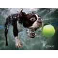 Willow Creek Press Underwater Dogs: Rocco Puzzle