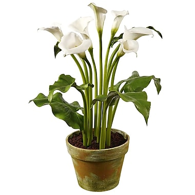 Winward Designs Calla in Clay Pot