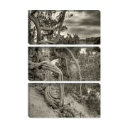 iCanvas 'Gorgon' by Geoffrey Ansel Agrons Photographic Print on Canvas; 18'' H x 12'' W x 1.5'' D