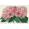Belle Banquet Azalea Placemat (Set of 6)