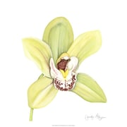 Evive Designs Orchid Beauty II by Jennifer Goldberger Painting Print