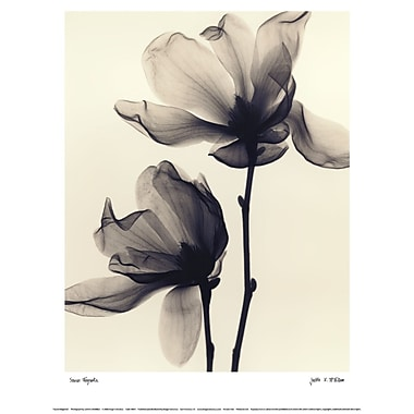 Evive Designs Saucer Magnolia by Judith Mcmillan Photographic Print