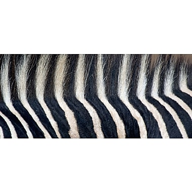 Evive Designs Close-up of a Greveys Zebra stripes and Mane by Panoramic Images Photographic Print